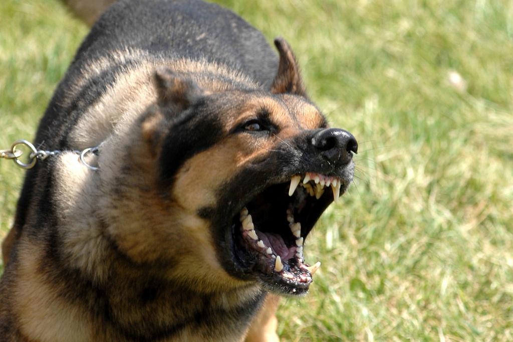 компенсация морального вреда за укусы собак
