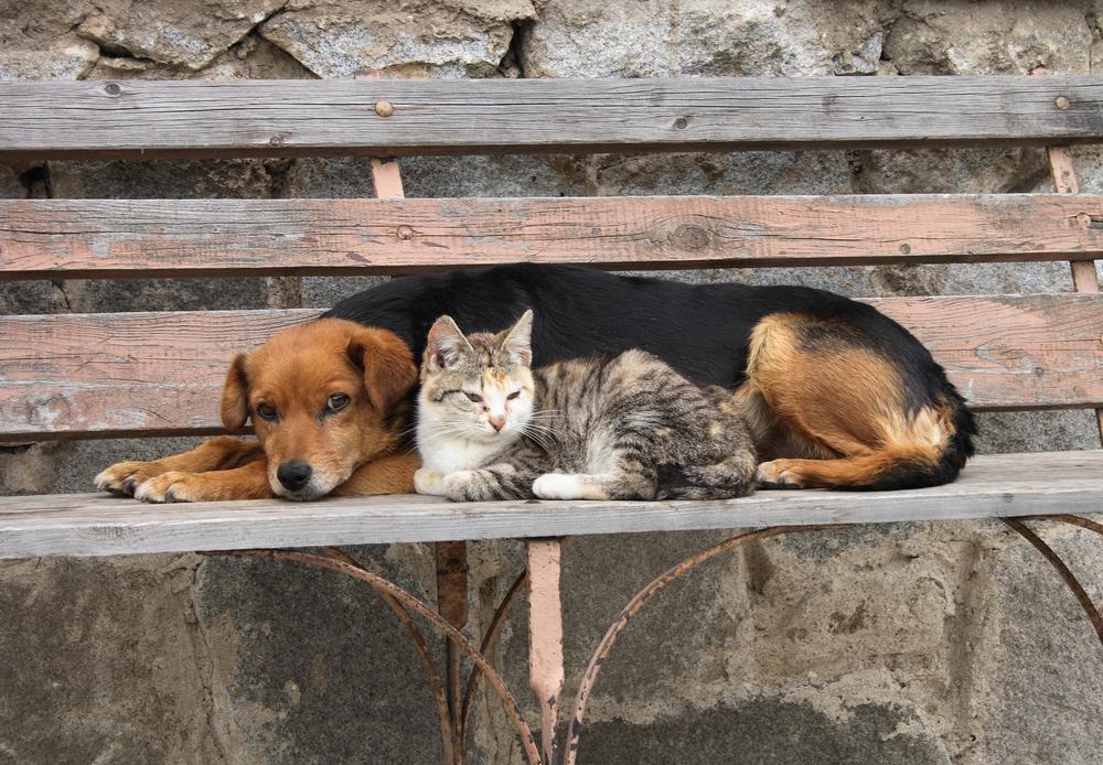 Картинки с брошенными животными